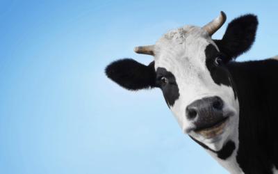 The Milk Myth