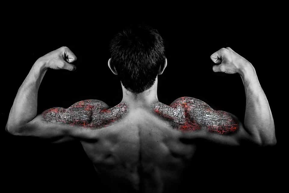 The Three Fundamentals of Building Muscle, Part I: Volume
