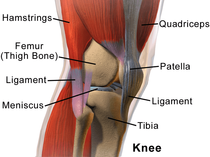 Knee Pain Why Do My Knees Hurt An Overview Of Knee Pain