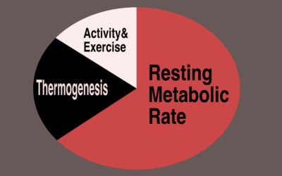 Metabolism: Why Burning Calories isn't the Answer